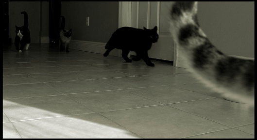 See, these cats are fleeing some bully bunnies in the other room