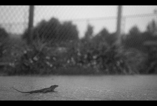 Rain-9545